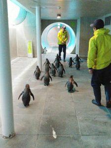 城崎マリンワールドのペンギン2